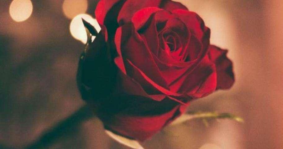 Romance 0ffer – your dream Valentine's Day